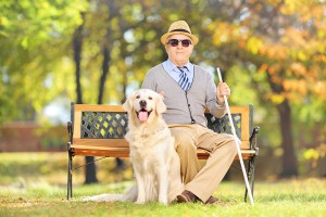 Senior blind gentleman sitting on a wooden bench with his labrad