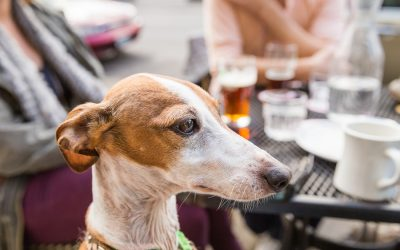Dining with Dogs: New Mexico Statutes for Service Animals and Pets in Restaurants