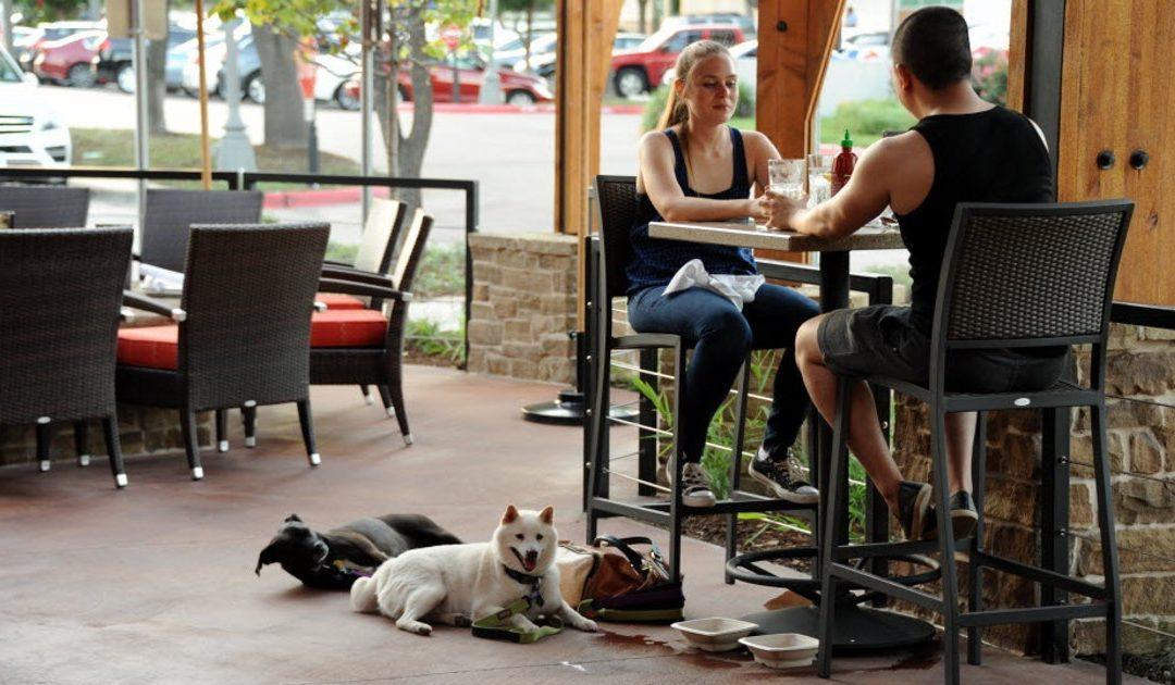 dogs on restaurant patio