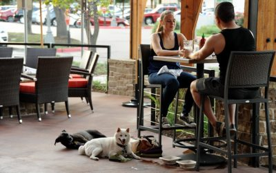 Dining out? Leave your pet at home